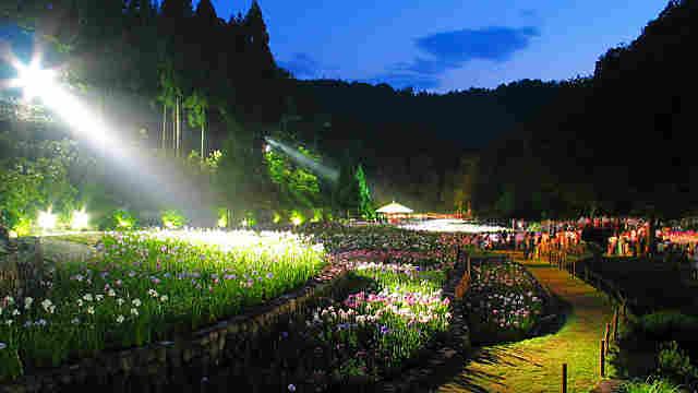 播州山崎花菖蒲園のライトアップ