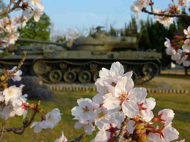 青野原駐屯地の桜