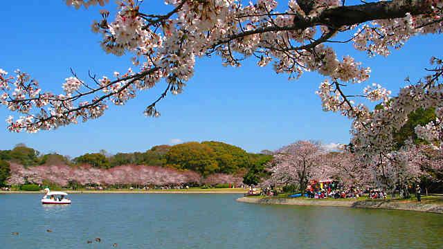 明石市の桜の名所