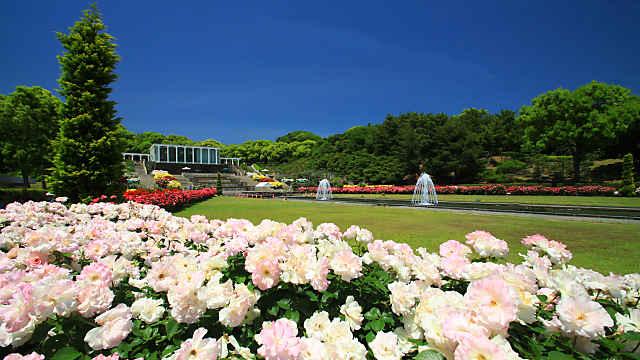 須磨離宮公園のバラ園