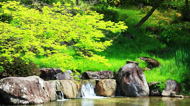 須磨離宮公園のモミジの新緑
