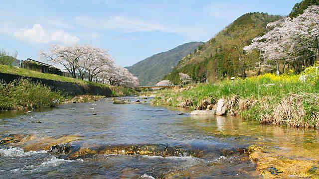 夢前川の桜 新庄の桜並木