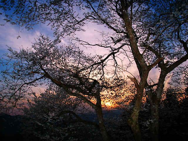 糸原のみづめ桜と夕日