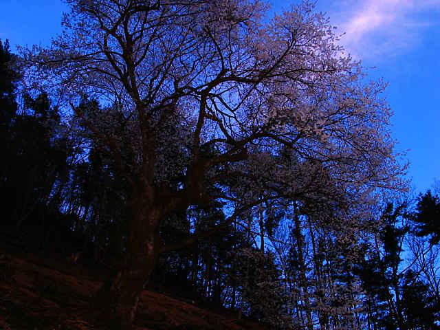 糸原のみづめ桜の夜景