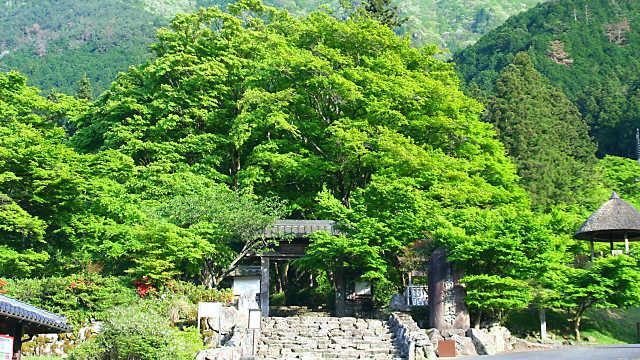 高源寺の新緑