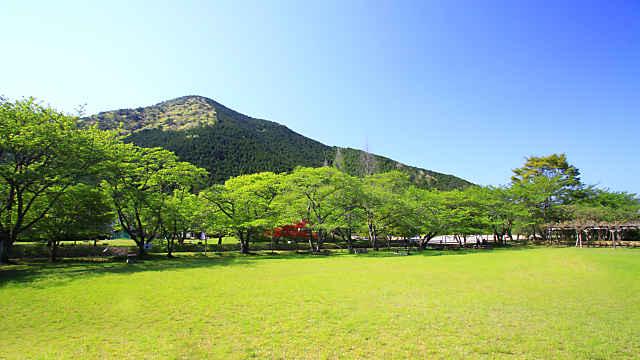 丹波少年自然の家・倉町野の桜の新緑
