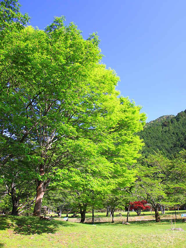 丹波少年自然の家・倉町野の新緑