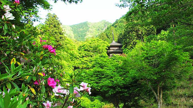 高源寺の新緑とつつじ