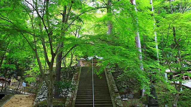 石龕寺の新緑