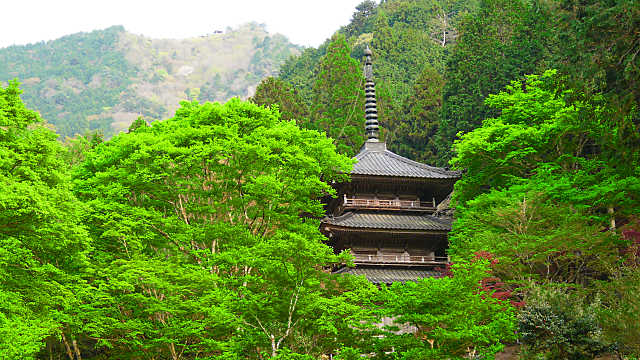 高源寺三重塔と新緑