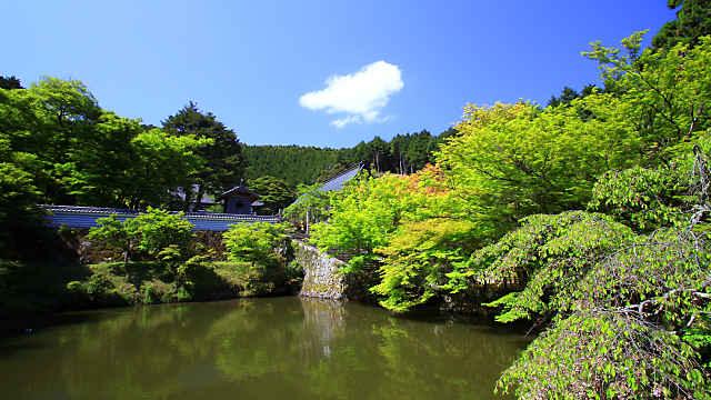 円通寺の新緑