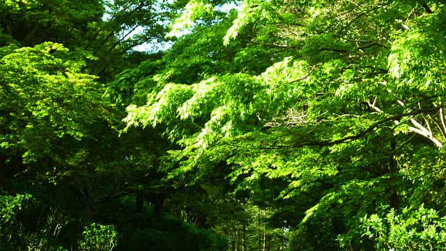 森林植物園の新緑