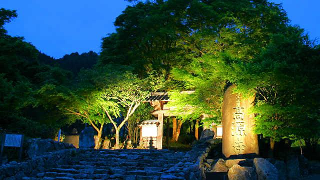 高源寺 新緑のモミジ ライトアップ