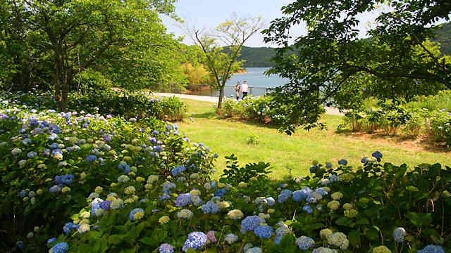 平荘湖あじさい園