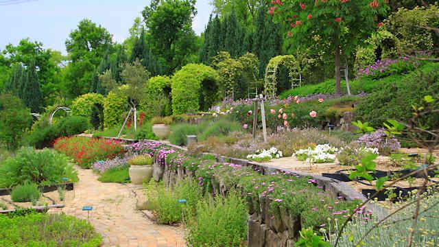 加古川ウェルネスパークのハーブ園