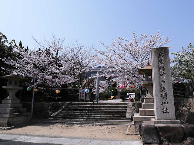 神戸護國神社の桜