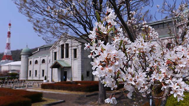 樽見の大桜 水の科学博物館