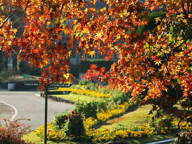 フラワーセンターの紅葉