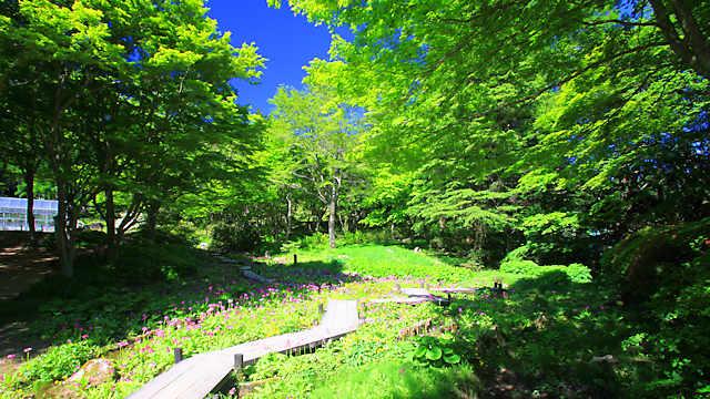 六甲高山植物園の新緑