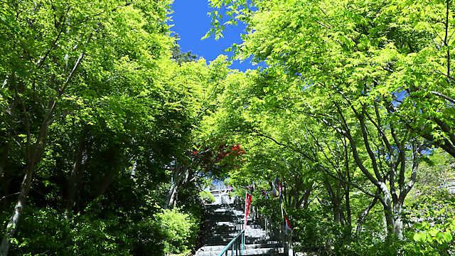 摩耶山天上寺のもみじの新緑