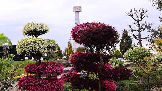 ひまわりの丘公園「マンサク」の花??