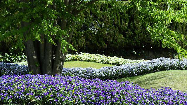 中央花壇に咲く春の花