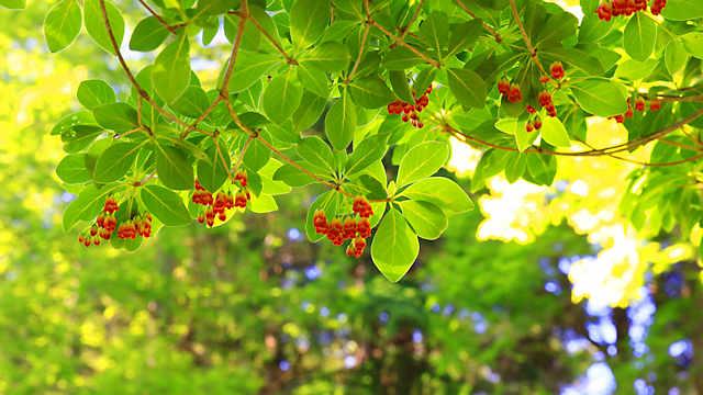 六甲高山植物園に咲く春から初夏の花