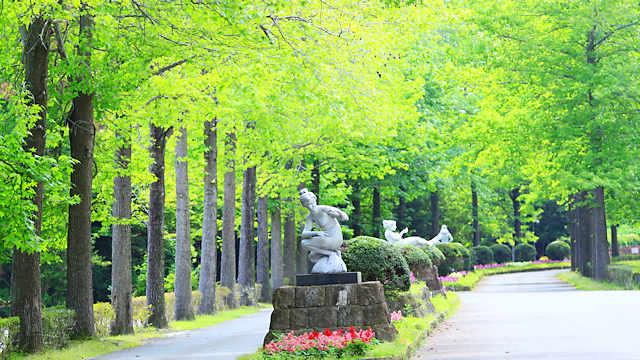 彫刻の道・モミジバフウの新緑