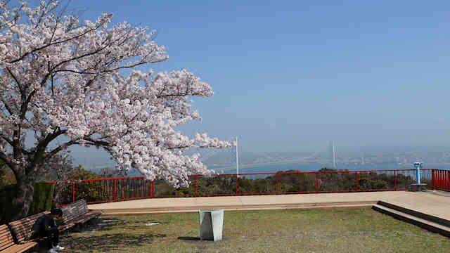 淡路島公園展望台の桜と明石海峡大橋