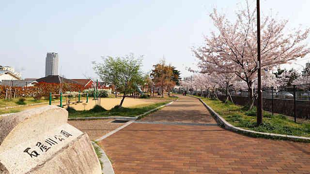 石屋川公園の桜