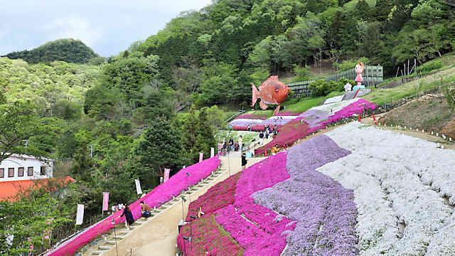ヤマサ蒲鉾「芝桜の小道」