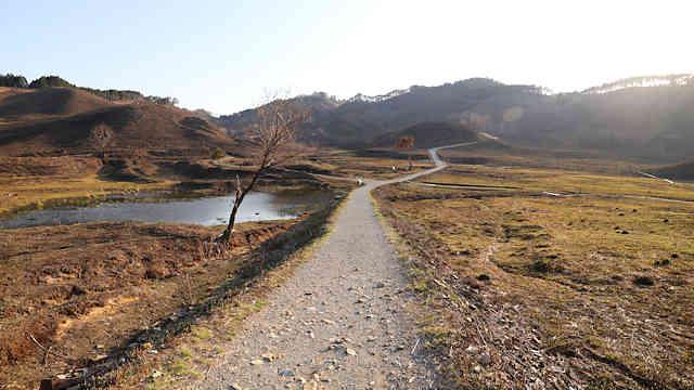砥峰高原の山焼きの跡