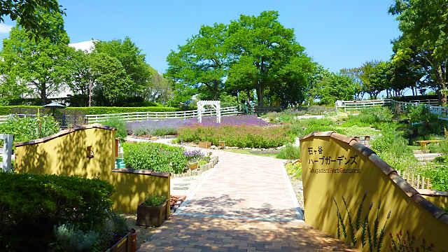 石ケ谷公園ハーブガーデンズのラベンダー