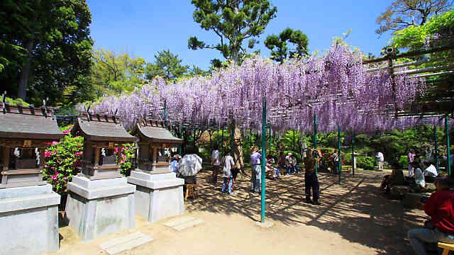 住吉神社 藤の花