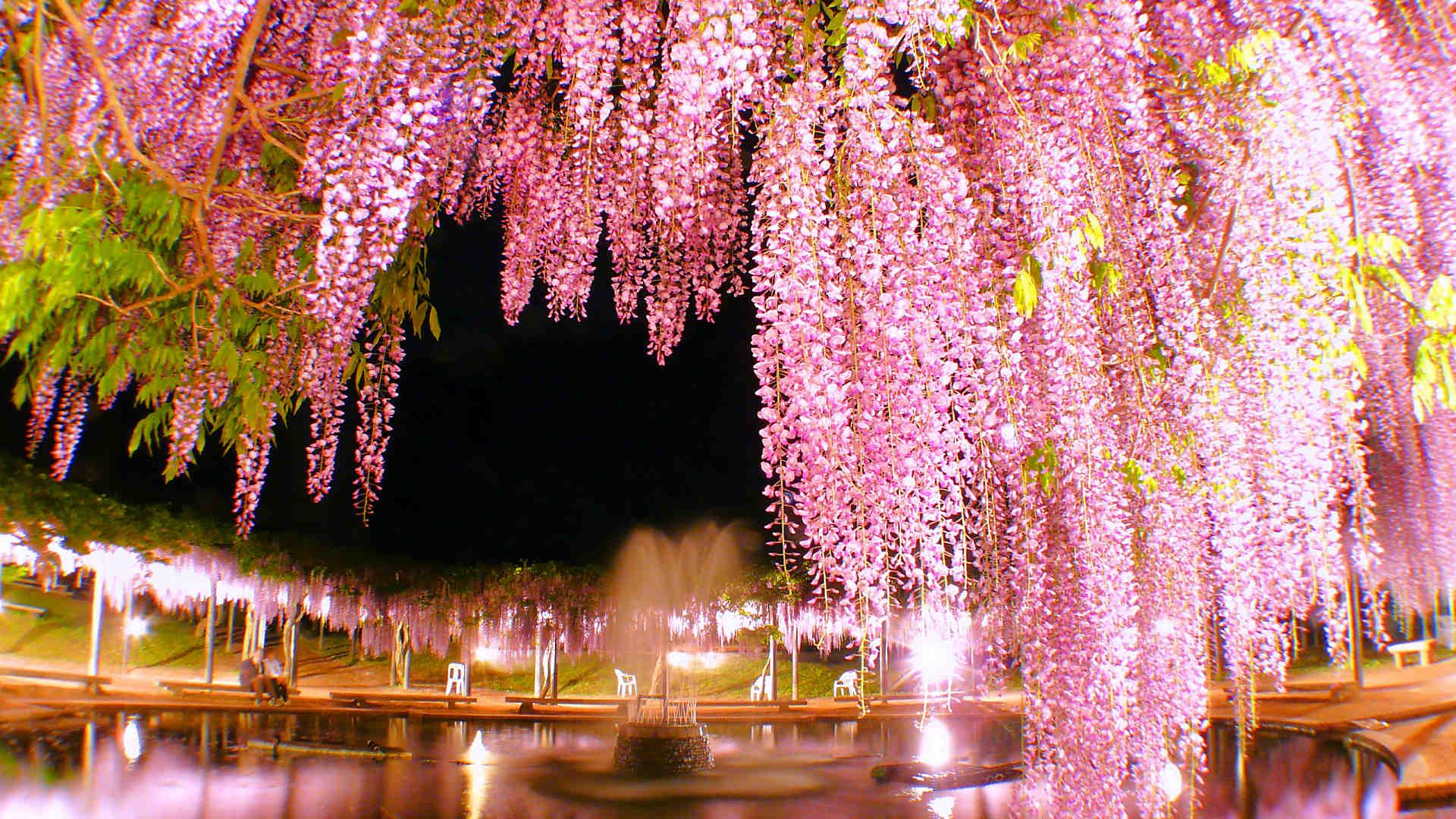 Несостоявшийся маршрут в мае 2020: Киото с окрестностями - Токио - Chichibu - Токио