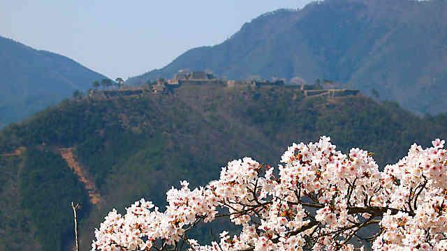 立雲峡桜まつり