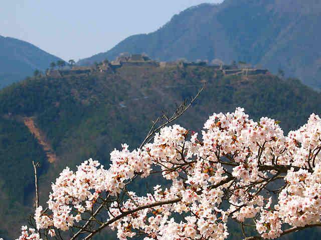 立雲峡の桜と竹田城跡