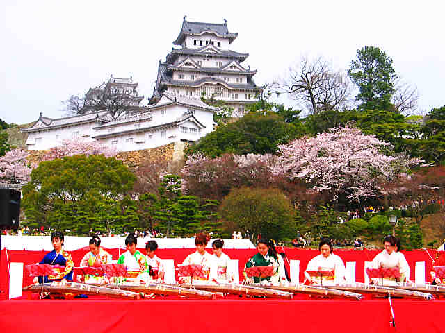 姫路城観桜会と姫路城の桜