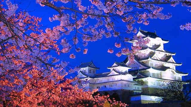 姫路城の夜桜ライトアップ