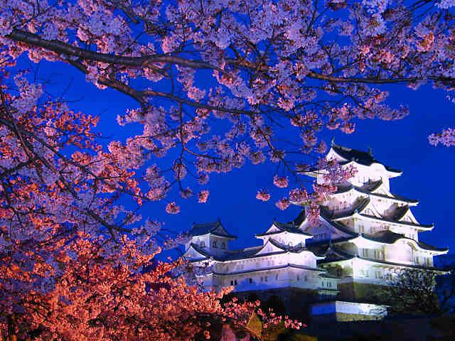 姫路城夜桜会 姫路城と桜のライトアップ