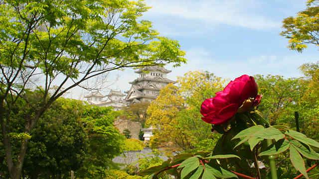 千姫ぼたん園と姫路城