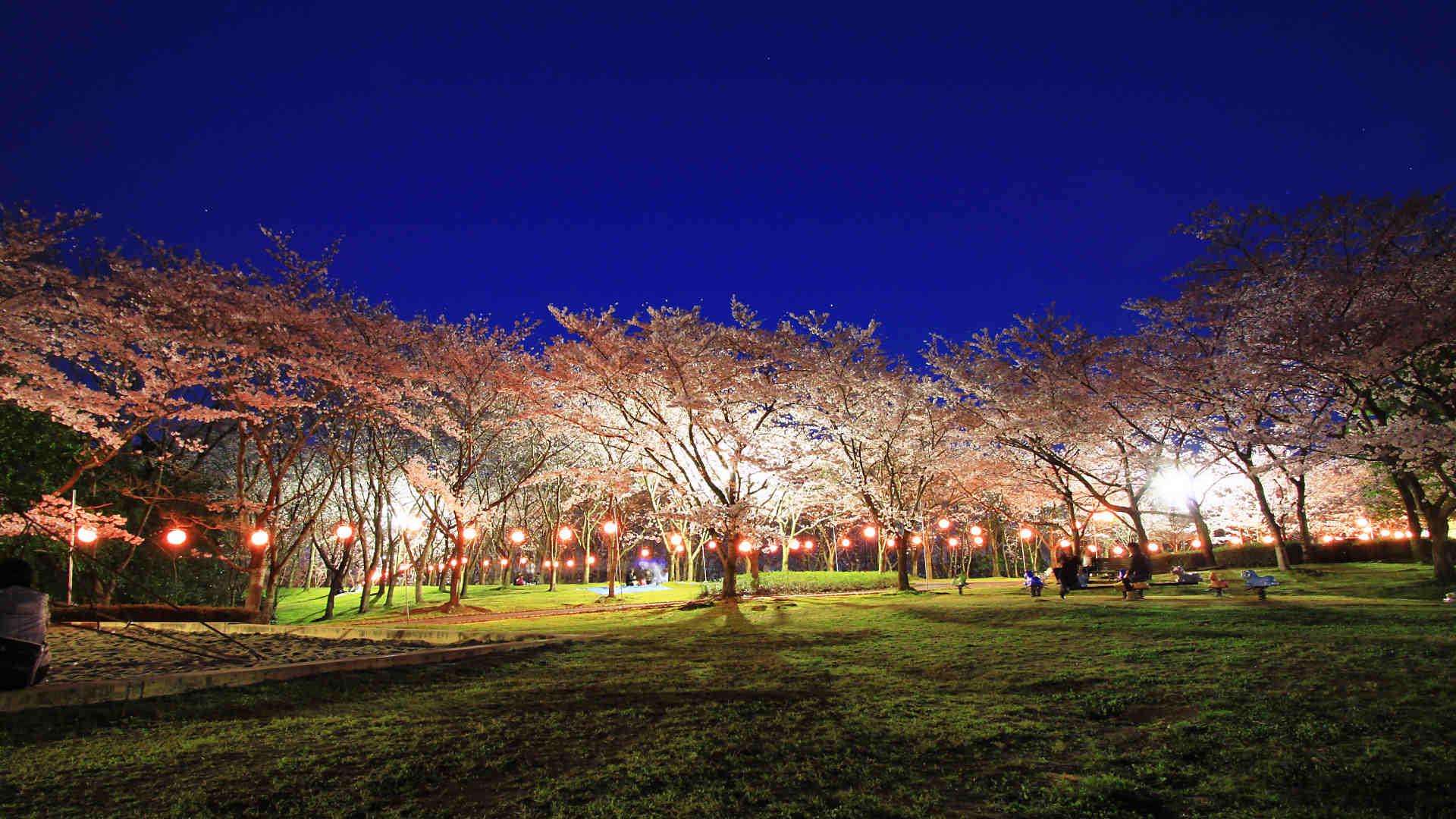 中央 公園 播磨