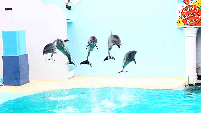 須磨海浜水族園のイルカ