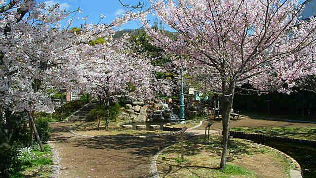 岡本南公園・桜守公園の桜