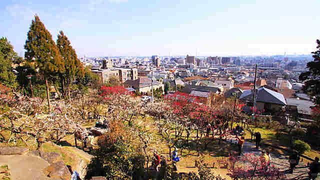 神戸・岡本梅林公園