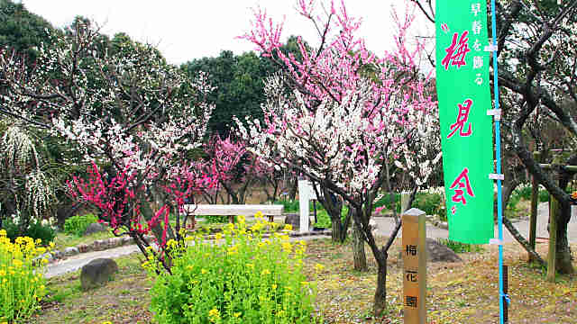 磨離宮公園の梅