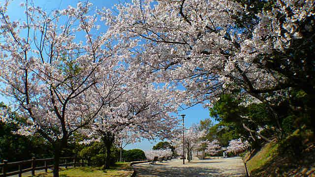 須磨浦公園 西エリアの桜
