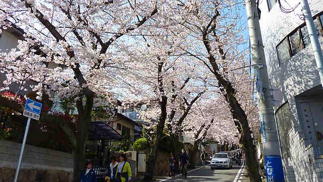 神戸高尾通の桜トンネル