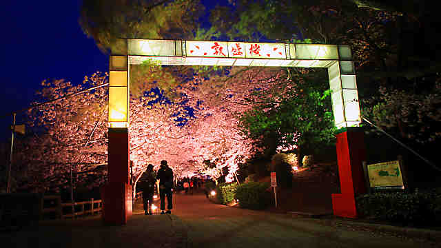 須磨浦公園夜桜のライトアップ・敦盛桜花灯り