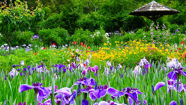 西新宿おじいちゃんとおばあちゃんの花しょうぶ園